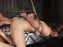tied up and ass played with